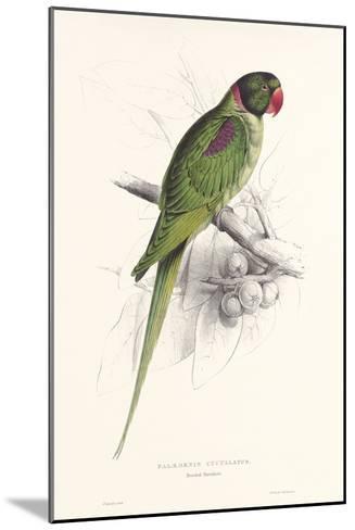 Hooded Parakeet-Edward Lear-Mounted Art Print