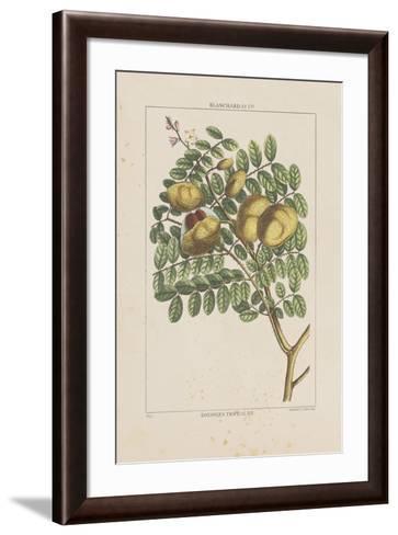 Les Botaniques II-Georg Dionysius Ehret-Framed Art Print