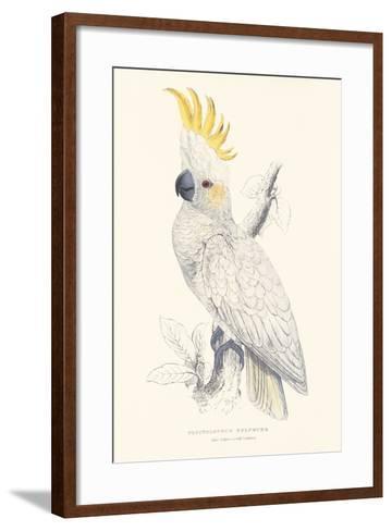 Lesser Sulphur-Crested Cockatoo-Edward Lear-Framed Art Print