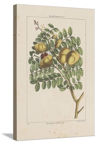 Les Botaniques II-Georg Dionysius Ehret-Stretched Canvas Print