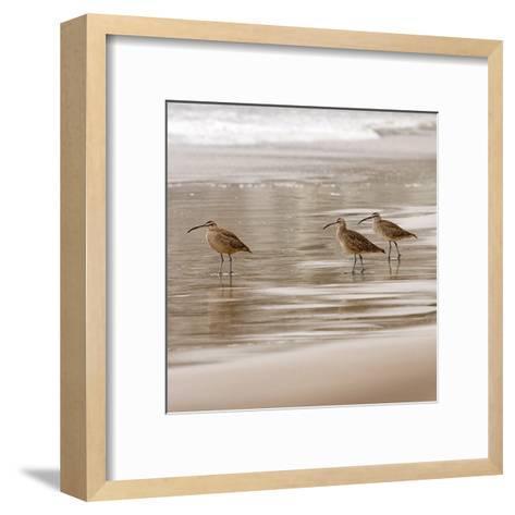 Shore Birds I-Danita Delimont-Framed Art Print