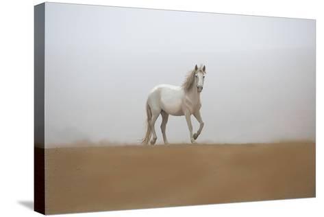 White Stallion-Sally Linden-Stretched Canvas Print