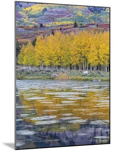 Fall Aspens Reflecting in a Pond-Don Paulson-Mounted Giclee Print