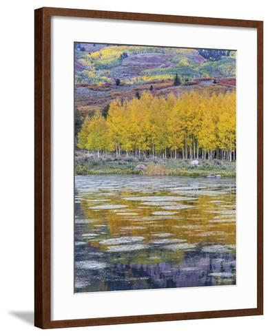 Fall Aspens Reflecting in a Pond-Don Paulson-Framed Art Print