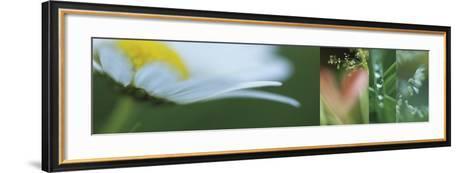 The Garden 2-Florence Delva-Framed Art Print