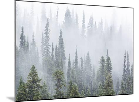 Foggy Forest-Don Paulson-Mounted Giclee Print