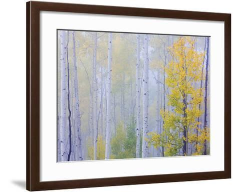 Foggy Morning Aspen I-Don Paulson-Framed Art Print