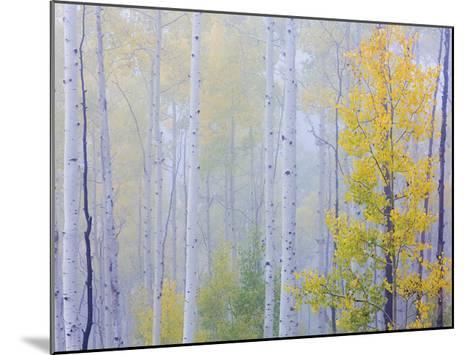 Foggy Morning Aspen I-Don Paulson-Mounted Giclee Print