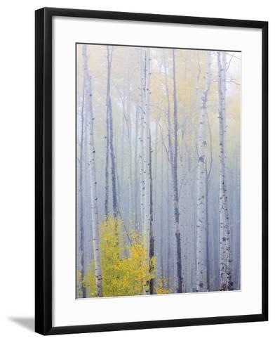 Foggy Morning in Aspen Forest I-Don Paulson-Framed Art Print