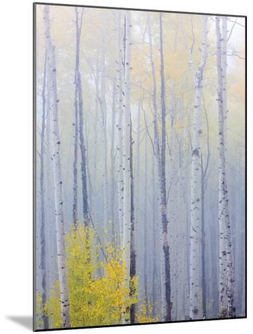 Foggy Morning in Aspen Forest I-Don Paulson-Mounted Giclee Print