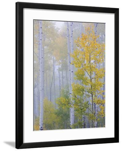 Foggy Morning in Aspen Forest II-Don Paulson-Framed Art Print
