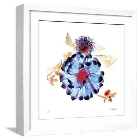 Translucent Dahlia-Kate Blacklock-Framed Art Print