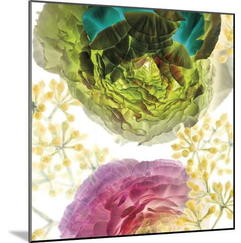Ranunculus-Kate Blacklock-Mounted Giclee Print