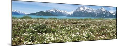 Wild Strawberry Flowers North of Gilbert Bay-Don Paulson-Mounted Giclee Print