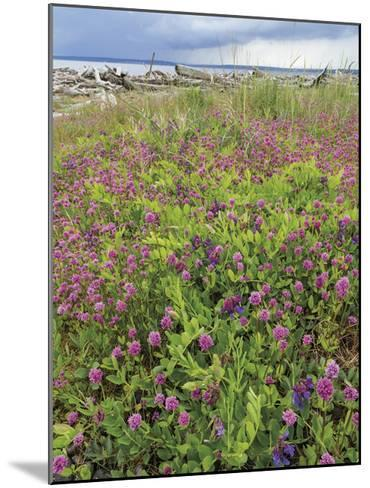 Sea Blush and Vetch-Don Paulson-Mounted Giclee Print