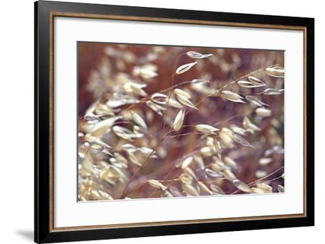 Oats 2-Ken Bremer-Framed Art Print