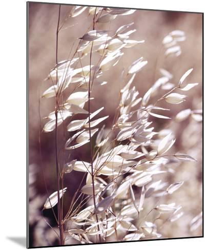 Oats 3-Ken Bremer-Mounted Giclee Print