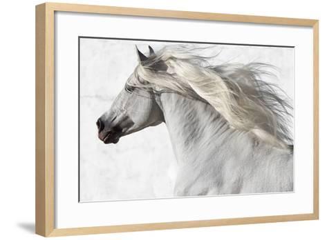 Cassanova 2-Susan Friedman-Framed Art Print