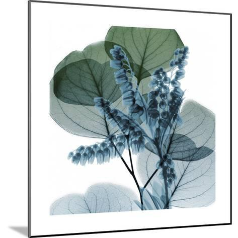 Lilly Of Eucalyptus 2-Albert Koetsier-Mounted Art Print