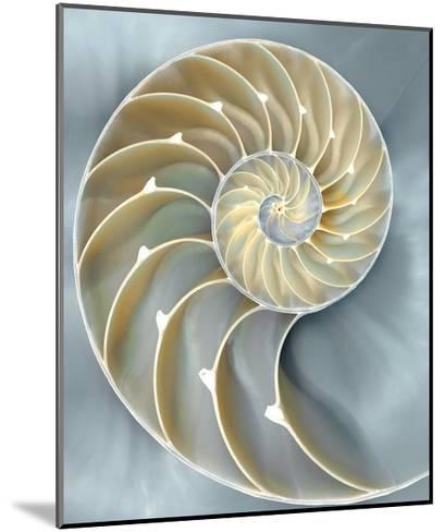 Nautilus in Blue I-Caroline Kelly-Mounted Giclee Print
