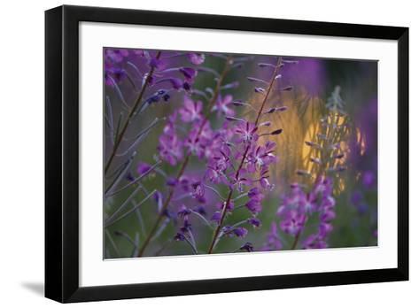 Purple Breeze-Peter Lilja-Framed Art Print