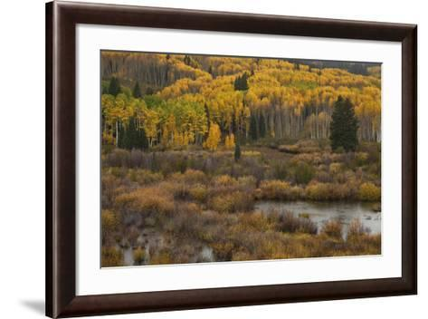 Kebler Autumn Rain-Michael Greene-Framed Art Print