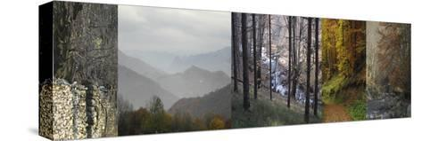 In Awe of Autumn I-Mary Karla-Stretched Canvas Print