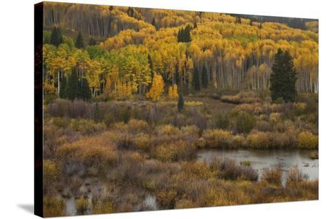 Kebler Autumn Rain-Michael Greene-Stretched Canvas Print