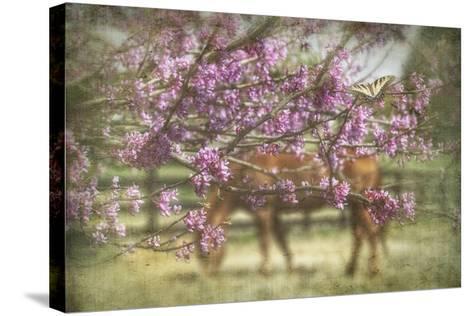 Spring has Sprung-PHBurchett-Stretched Canvas Print