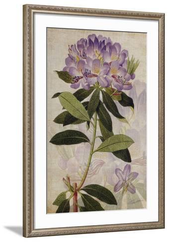 Rhododendron II-John Butler-Framed Art Print