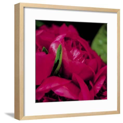 Peonies I-Ella Lancaster-Framed Art Print