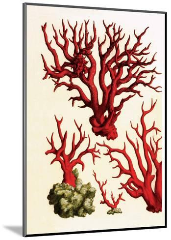 Red Coral, Cabinet Of Natural Curiosities (1734 1765) Albertus Seba