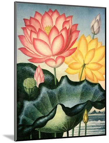 Botanical Print, The Sacred Egyptian Bean-Peter Charles Henderson-Mounted Art Print