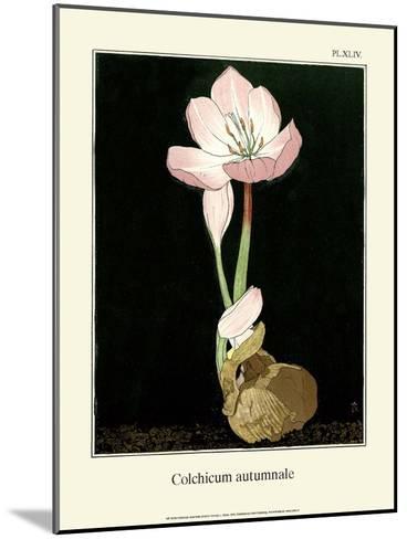 Botanical Print, Autumn Crocus, 1905-Luite Klaver-Mounted Art Print