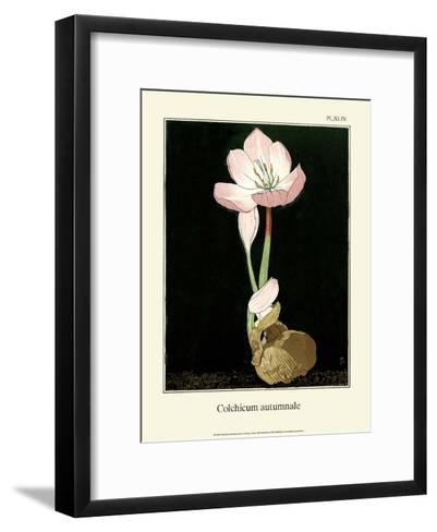 Botanical Print, Autumn Crocus, 1905-Luite Klaver-Framed Art Print