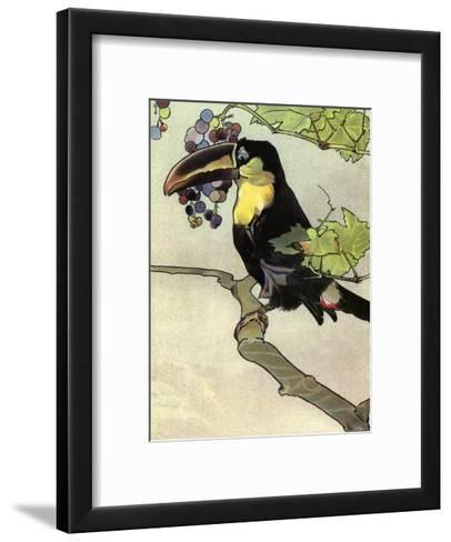 Bird Illustration, The Toucan, 1899-Edward Detmold-Framed Art Print