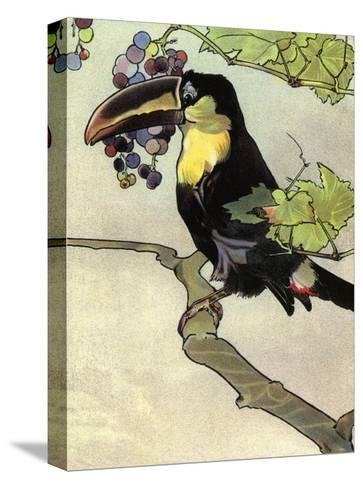 Bird Illustration, The Toucan, 1899-Edward Detmold-Stretched Canvas Print