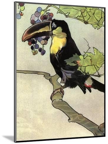 Bird Illustration, The Toucan, 1899-Edward Detmold-Mounted Art Print
