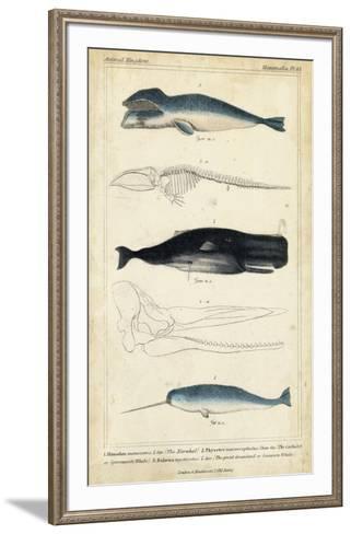 Antique Whale & Dolphin Study III-G. Henderson-Framed Art Print