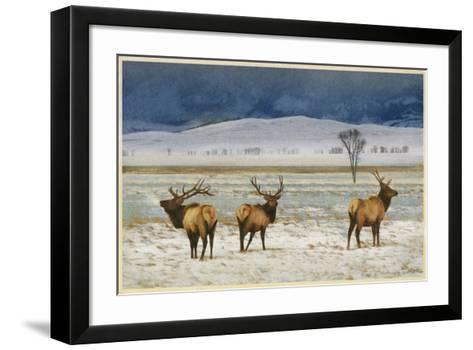 Refuge Elk-Chris Vest-Framed Art Print