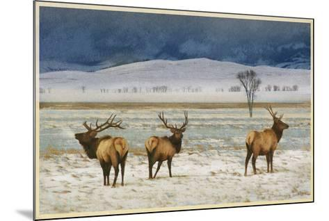 Refuge Elk-Chris Vest-Mounted Art Print