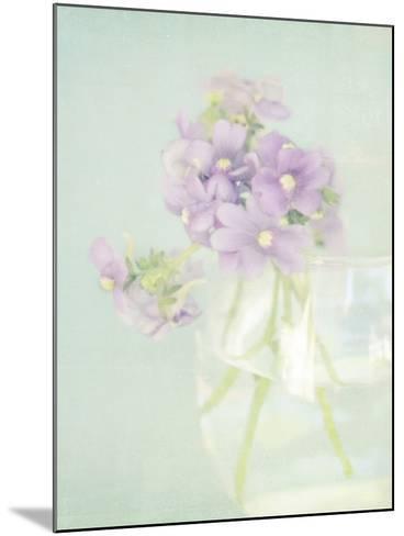 Candy Flowers V-Shana Rae-Mounted Giclee Print