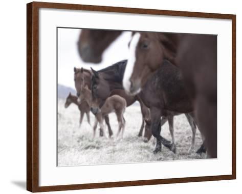 Roam-Chris Dunker-Framed Art Print