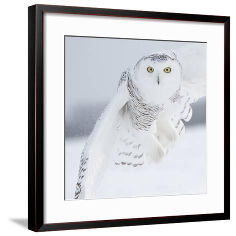Owl in Flight I-PHBurchett-Framed Art Print