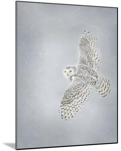 Owl in Flight II-PHBurchett-Mounted Art Print