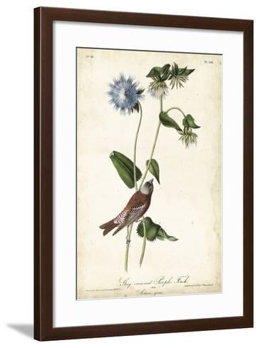 Grey-crowned Purple Finch-John James Audubon-Framed Art Print