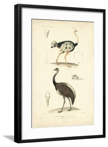 Antique Ostrich Study-N^ Remond-Framed Art Print