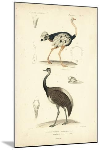 Antique Ostrich Study-N^ Remond-Mounted Giclee Print