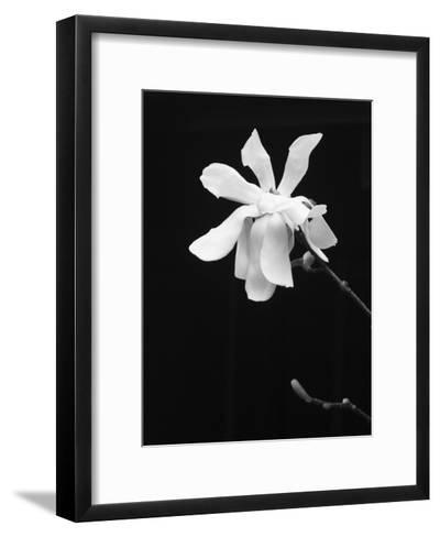 Floral Portrait VII-Jeff Pica-Framed Art Print