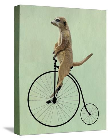 Meerkat on Black Penny Farthing-Fab Funky-Stretched Canvas Print